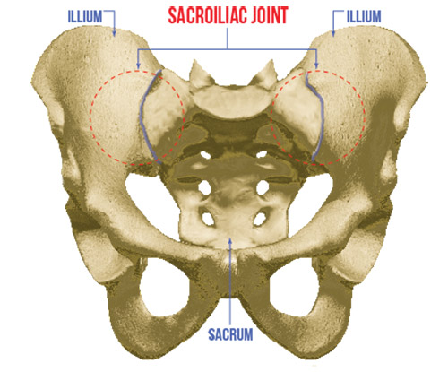 Picture of Sacroiliac Joint on pelvis bone