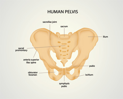 Pelvic Diagram Wiring Diagram